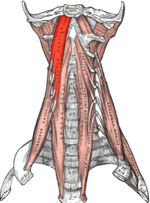 Neck Pain image