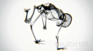 x-ray-yoga