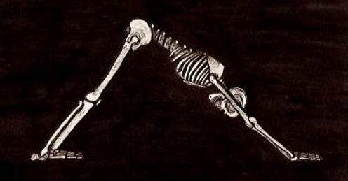 skeleton-yoga-downdog