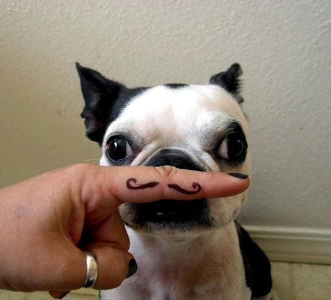Fake mustache yoga dog