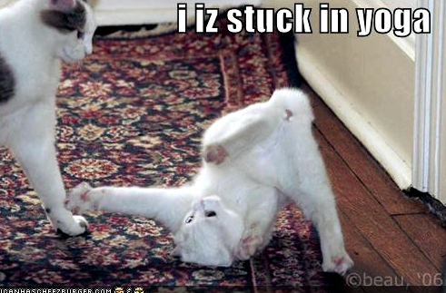 stuck-in-yoga-cat