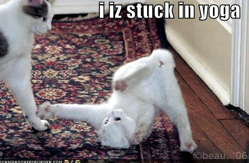 stuck-in-yoga-cat