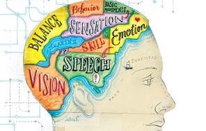 brain_map